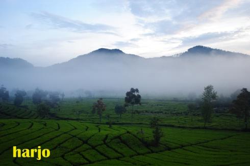Kabut masih menutupi pegunungan di Rancabali